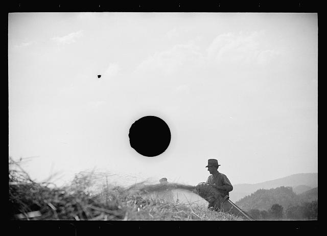 [Untitled photo, possibly related to: Threshing, Tygart Valley, West Virginia]