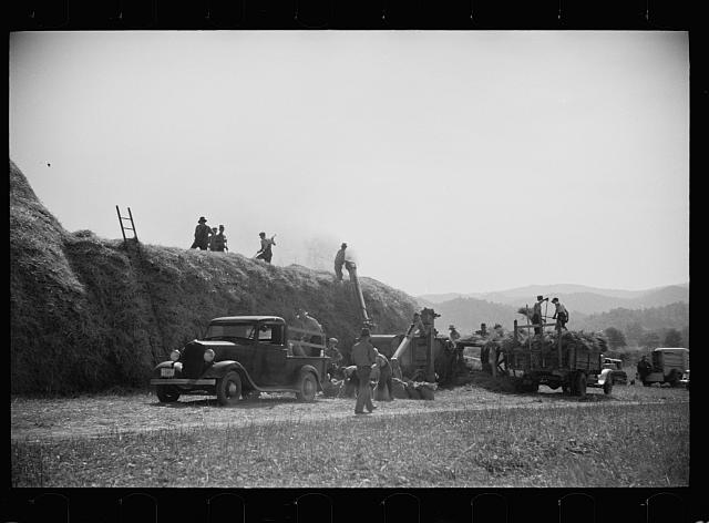 Threshing, Tygart Valley, West Virginia