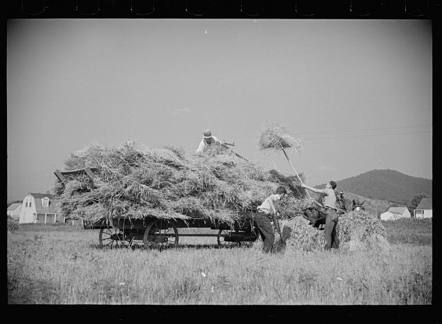 [Untitled photo, possibly related to: Tygart Valley, West Virginia, threshing crew]