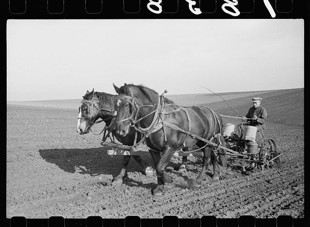 [Corn planting, Jasper County, Iowa]