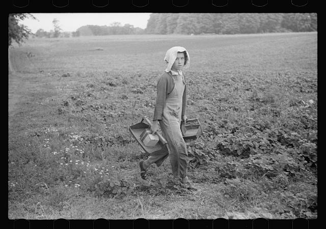 Migrant girl, strawberry picker, Berrien County, Mich.