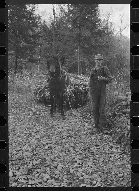 [Untitled photo, possibly related to: Man from Nicholson Hollow with one of the few horses, Shenandoah National Park, Virginia]