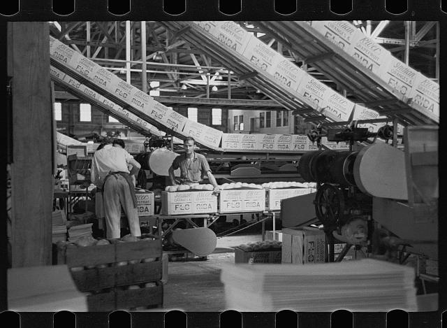 Scene in the packing plant at Fort Pierce, Florida