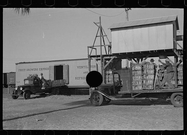 [Untitled photo, possibly related to: Loading celery, Sanford, Florida]