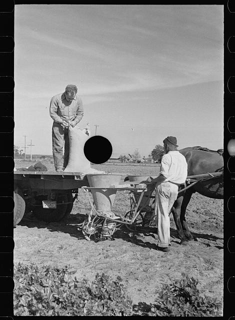 [Untitled photo, possibly related to: Large quantities of fertilizer are used to grow celery, Sanford, Florida]