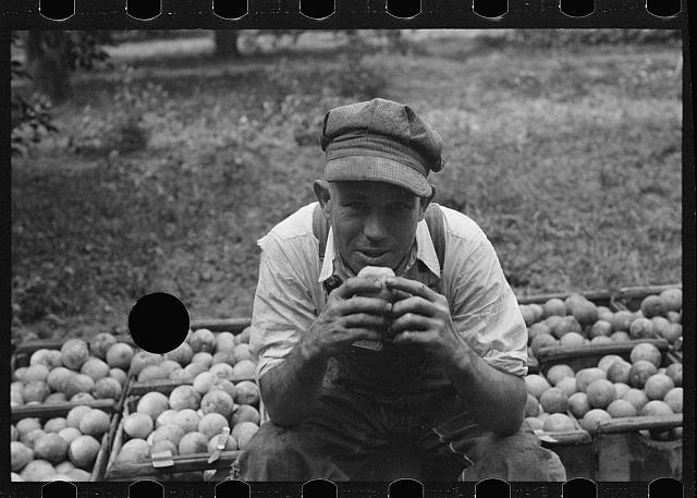 [Untitled photo, possibly related to: A Florida orange picker. Many of these workers are migrants. Polk County, Florida]