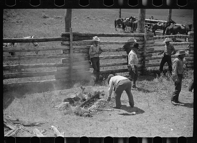 [Untitled photo, possibly related to: Removing branding irons from fire, Three Circle roundup, Custer National Forest, Montana]