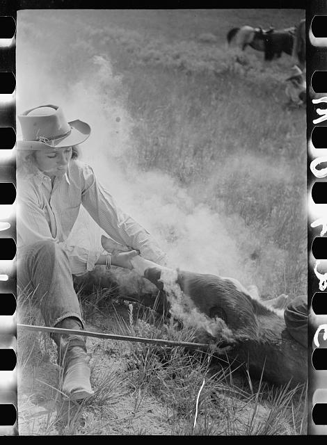 "[Untitled photo, possibly related to: Dude girl ""rassling"" a calf, Quarter Circle U Ranch roundup, Montana]"