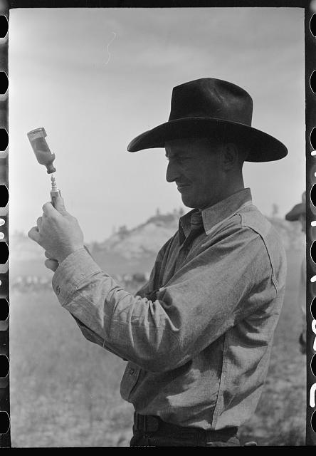 Cowboy filling syringe with blackleg serum, Quarter Circle U Ranch roundup, Montana