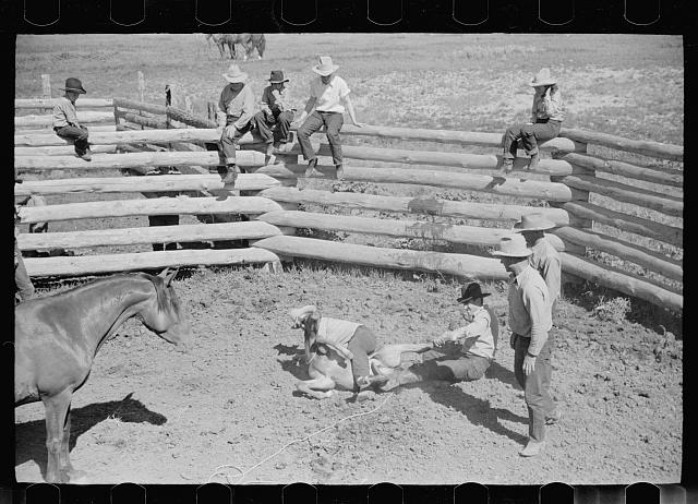 [Untitled photo, possibly related to: Branding a colt, Quarter Circle U roundup, Montana]