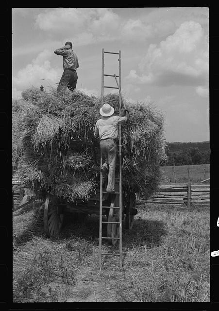 [Untitled photo, possibly related to: Threshing and baling, Brookeville, Maryland]