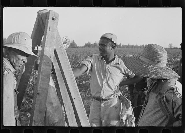 Weighing in cotton, Pulaski County, Arkansas