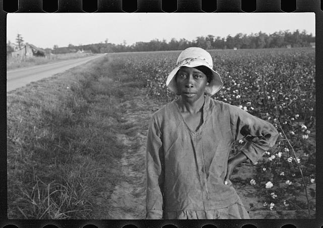 [Untitled photo, possibly related to: Cotton pickers, Pulaski County, Arkansas]