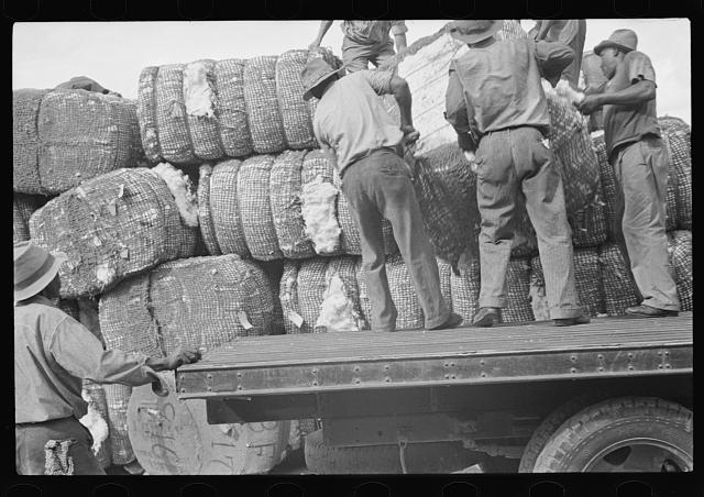 [Untitled photo, possibly related to: Loading cotton in Natchez, Mississippi]