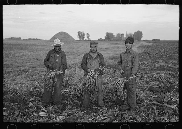 Mexican beet workers, near Fisher, Minnesota