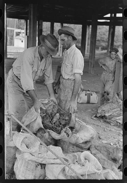 [Untitled photo, possibly related to: Dumping oysters into sacks from wire baskets, Olga, Louisiana]