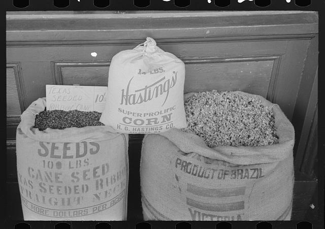 Cane, corn and cotton seed displayed for sale for seed purposes. These are the main crops of San Augustine County, Texas