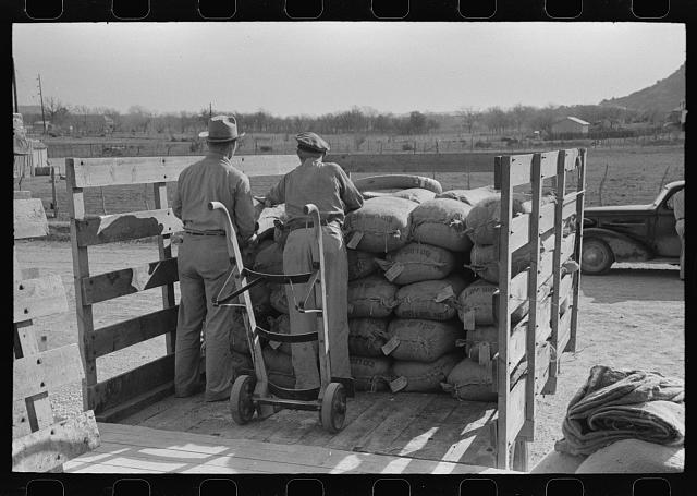 [Untitled photo, possibly related to: Stock salt and cotton seed meal on truck at warehouse of Kimble County, wool and mohair company. Junction, Texas]