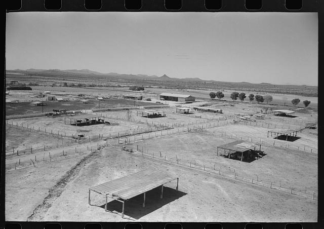 Dairy cattle shelters at the Casa Grande Valley Farms, Pinal County, Arizona