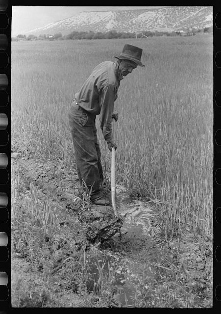 Spanish-American farmer irrigating his wheat field, Rodarte, New Mexico