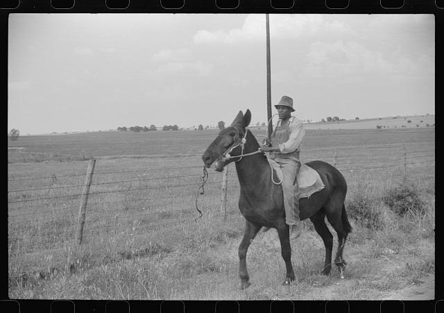 Negro cowhand in Hale County, Alabama