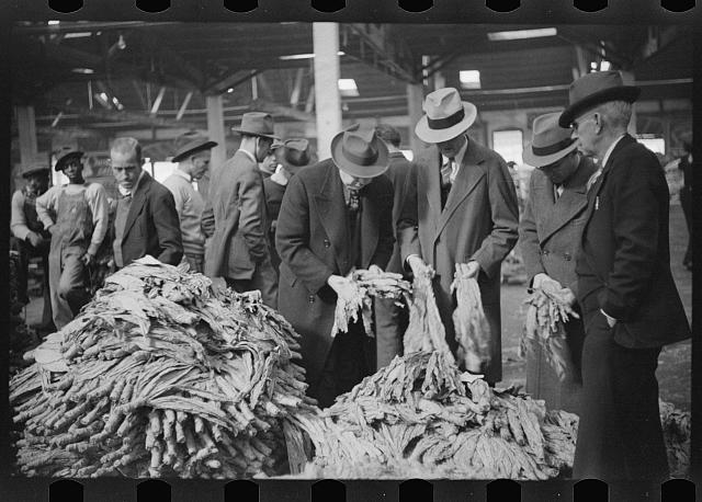 Buyers looking at tobacco in warehouse during auction sales, Durham, North Carolina