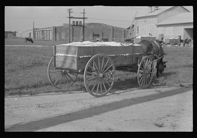 [Untitled photo, possibly related to: Wagonload of cotton near the gin. Vicinity of Moundville, Alabama]