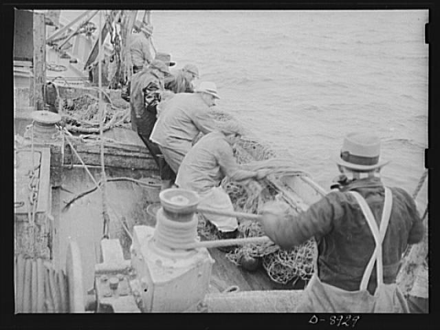 Victory food from American waters. The crew of Old Glory pulls up a sizeable haul of fish. Almost all of this catch will be filleted and frozen for military and lend-lease shipment