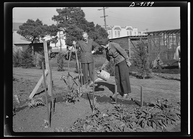 Victory Gardens--for family and country. Frequent watering of the Victory Garden is necessary during the early stages of growth. The soil should be well watered and watering should not be done during strong sunshine