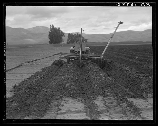 Sugar beet field freshly plowed by tractor with plowshare attached and showing Mexican operator. California