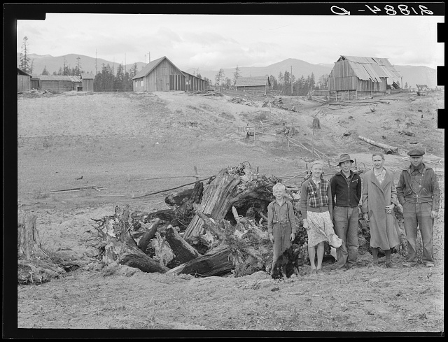 The Unruf family, stump pile, and their partly developed farm. Boundary County, Idaho. See general caption 52