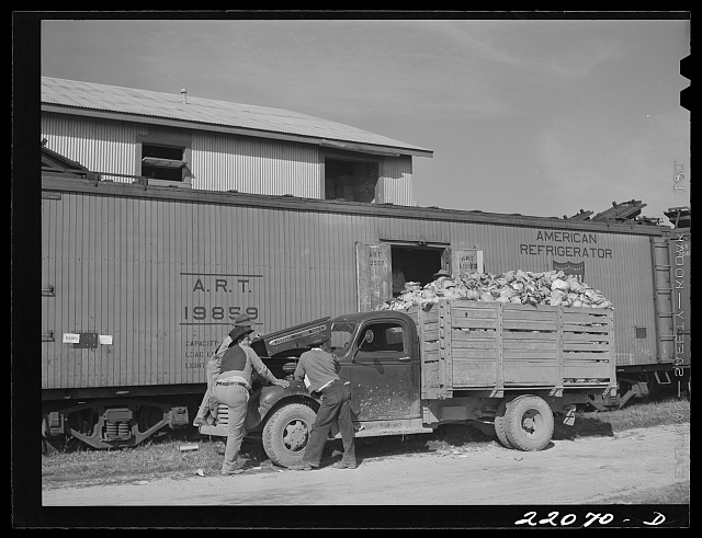 Donna, Texas. Loading cabbage
