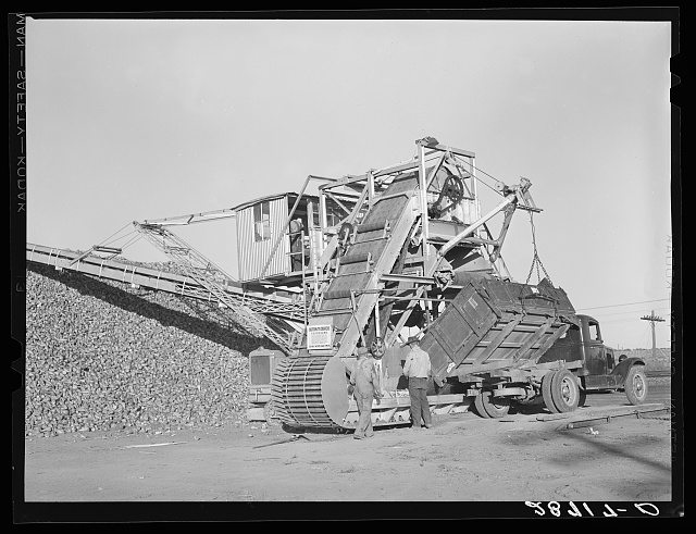 Unloading sugar beets from farmer's truck. Adams County, Colorado