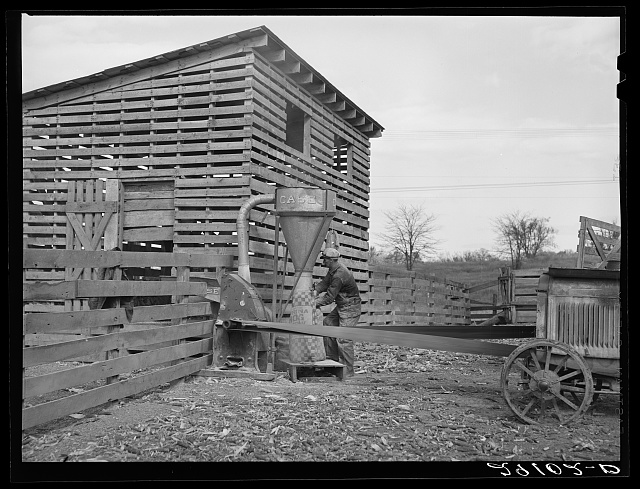 Grinding corn for feed. Boone County, Missouri