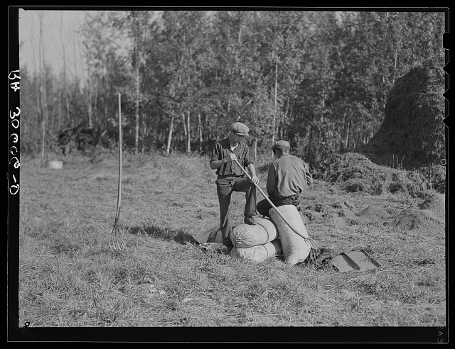 Threshing hands resting on sacks of alfalfa seed near Littlefork, Minnesota