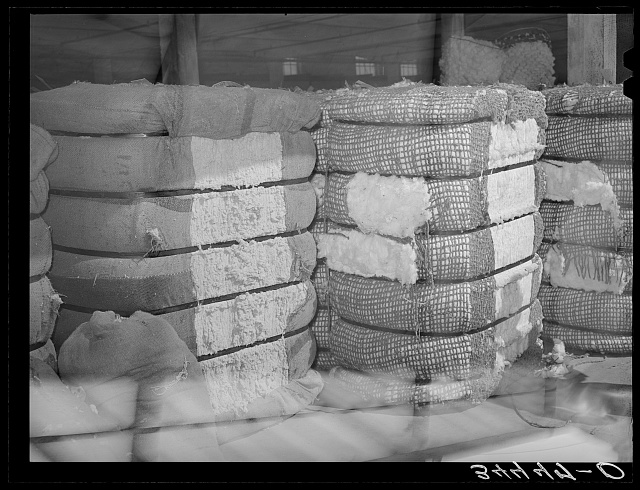 Bale of cotton linters and bale of middling cotton side by side in waarehouse. The bale of linter, on the side, left, is the fiber which is close to the seed. One of its major uses is the making of cellulose. Houston, Texas
