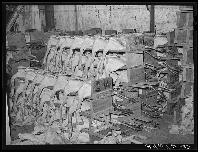 Dressed turkeys on the packs ready to be packed for shipping. Cold storage plant, Brownwood, Texas