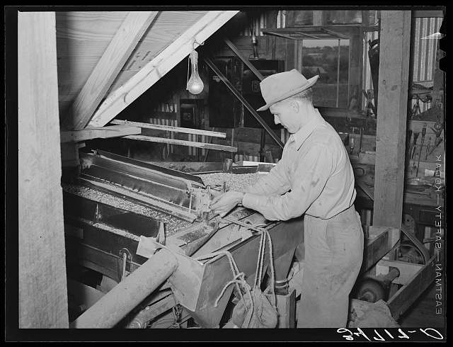 Adjusting peanut grader. Peanut-shelling plant. Comanche, Texas