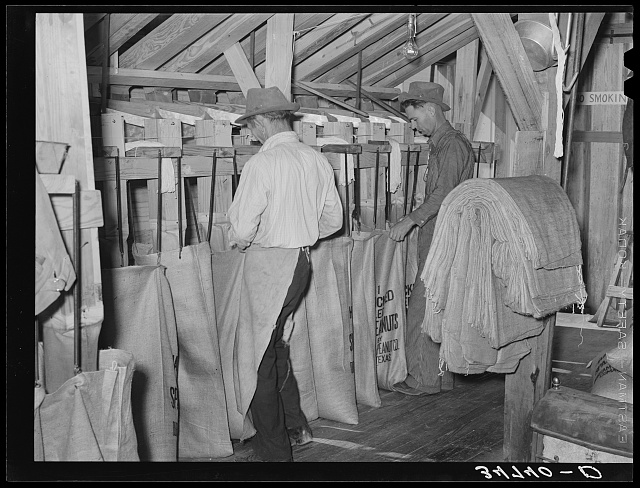 Sacking graded peanuts. Peanut-shelling plant. Comanche, Texas