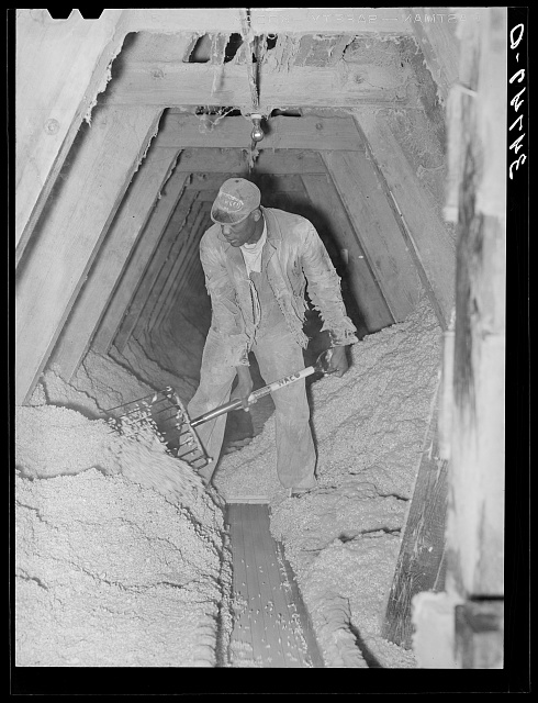 Pushing cotton seed onto conveyor. Cotton seed oil mill. McLennan County, Texas