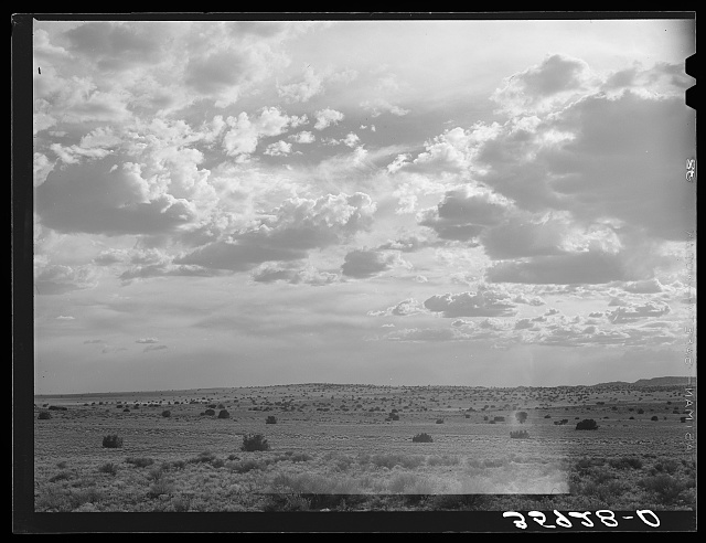Desert scene in the late afternoon. Sandoval County, New Mexico