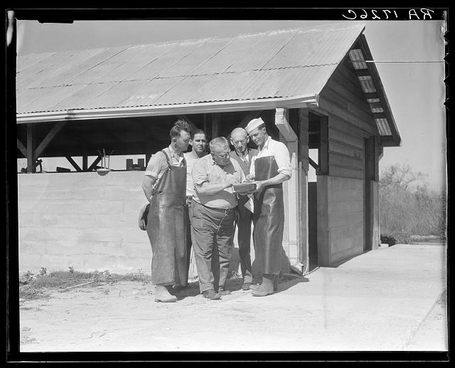 The self-help cooperative dairy which is being taken over by the Resettlement Administration, near Santa Ana, California. This dairy supplies milk to the Civilian Conservation Corps camps nearby