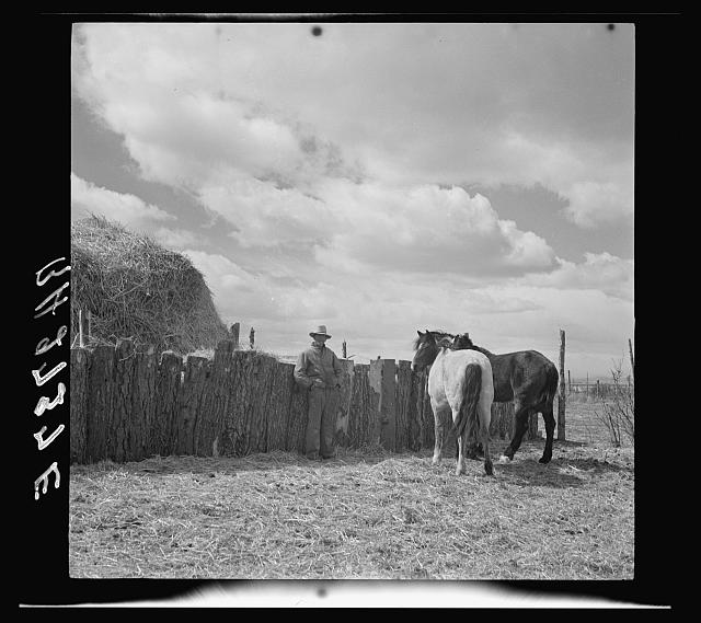 A rehabilitation client of Arroyo Seco, New Mexico, with team of horses purchased under a resettlement loan