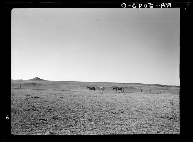 Horses on the grassless plains of eastern Montana