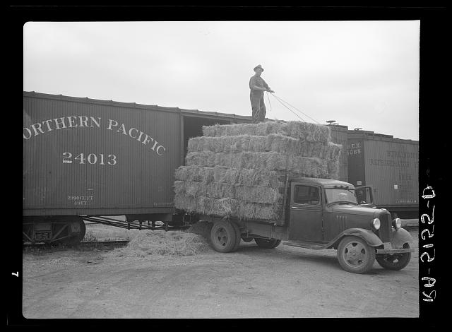Unloading bales of hay near Dickinson, North Dakota