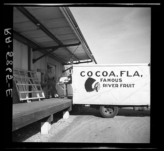 Loading oranges in Fort Pierce, Florida