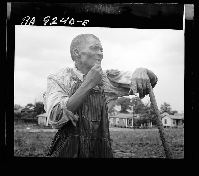 Hoe culture in the South. Negro farmhand. Near Birmingham, Alabama