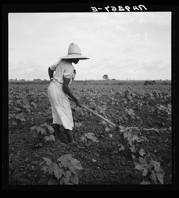 Alabama Negro working in field near Eutaw, Alabama