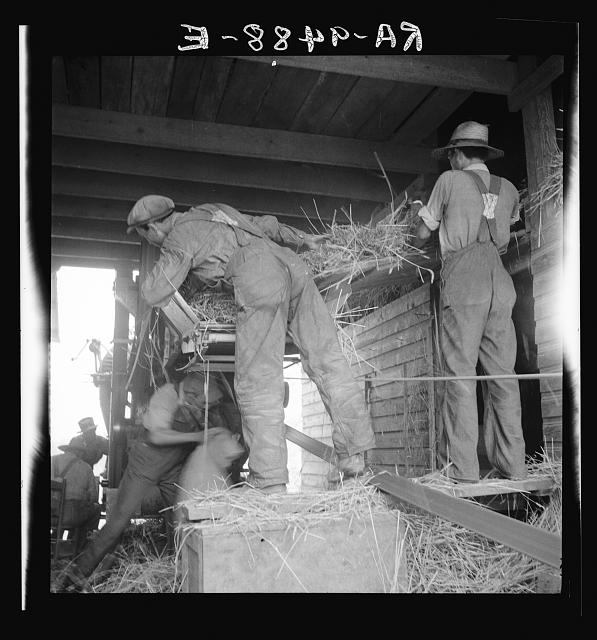 North Carolina threshing