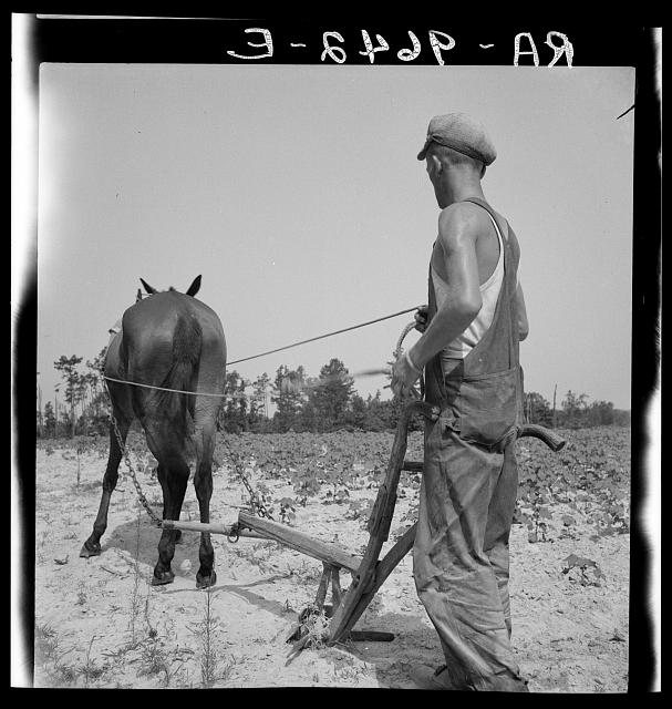 White tenant farmer works on shares. North Carolina